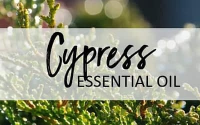 Cypress Essential Oil – Uses and Benefits