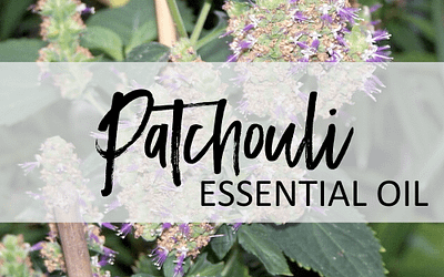 Patchouli Essential Oil – Uses & Benefits